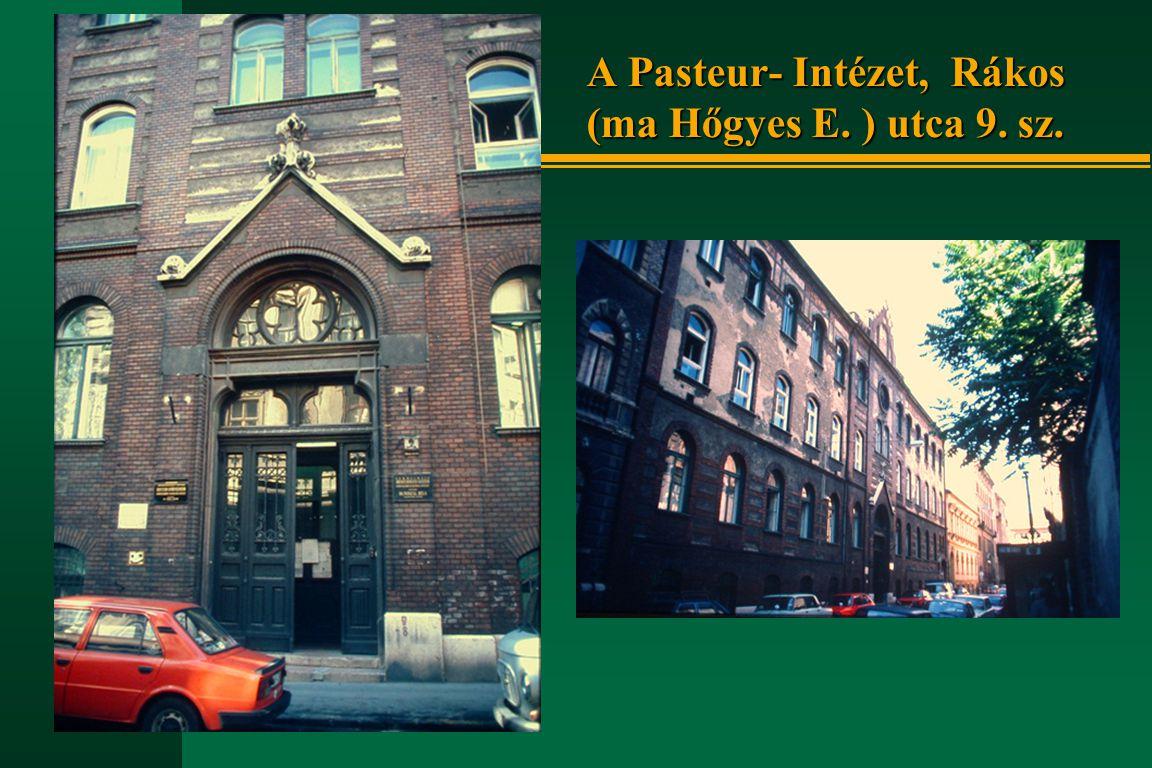 A Pasteur- Intézet, Rákos (ma Hőgyes E. ) utca 9. sz.