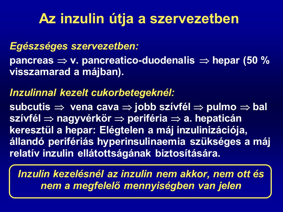 Az inzulin útja a szervezetben