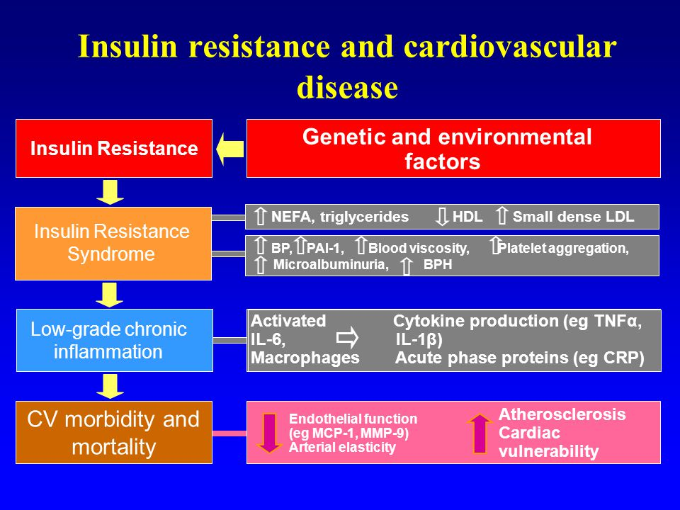 Insulin resistance and cardiovascular disease
