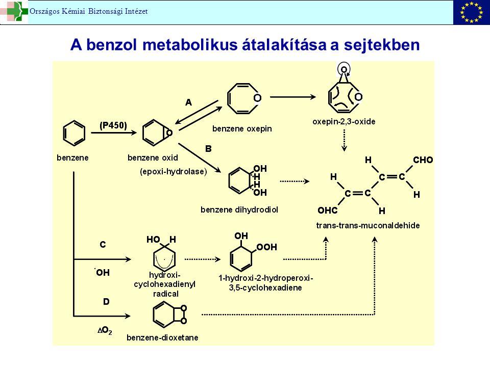 A benzol metabolikus átalakítása a sejtekben