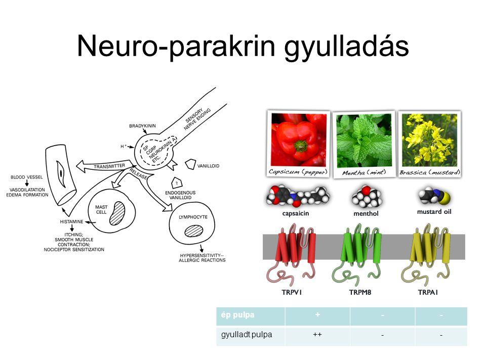 Neuro-parakrin gyulladás