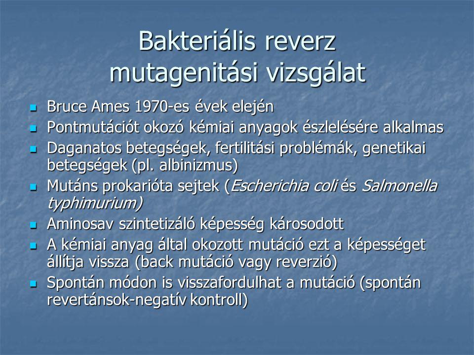 Bakteriális reverz mutagenitási vizsgálat