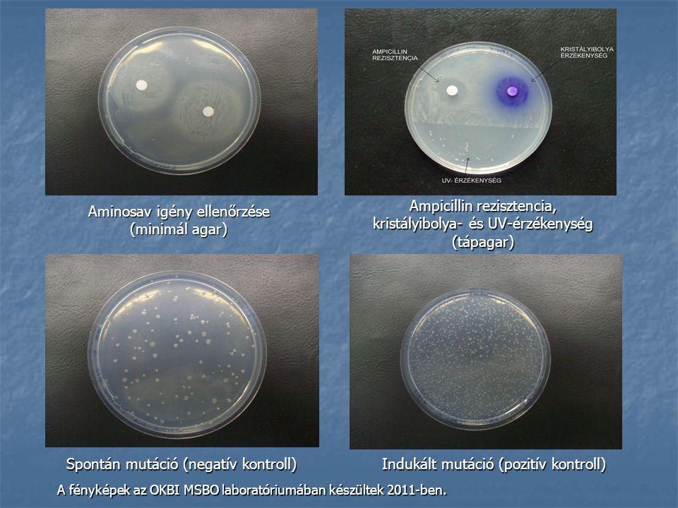 Ampicillin rezisztencia, kristályibolya- és UV-érzékenység (tápagar)