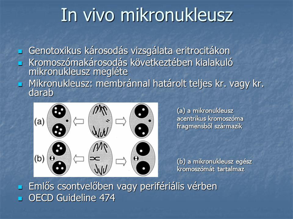In vivo mikronukleusz Genotoxikus károsodás vizsgálata eritrocitákon