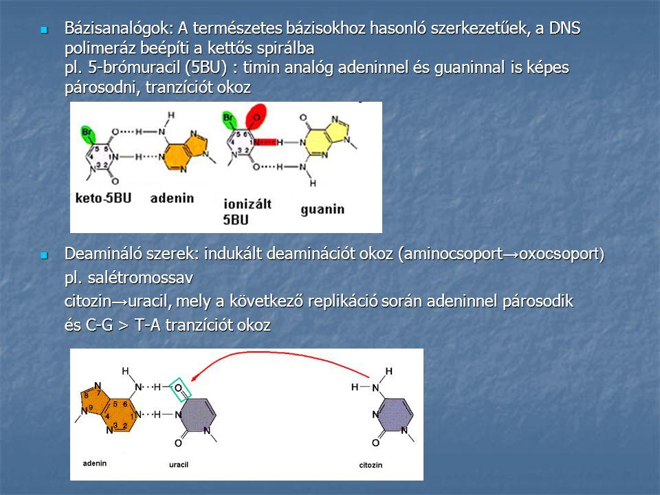 Bázisanalógok: A természetes bázisokhoz hasonló szerkezetűek, a DNS polimeráz beépíti a kettős spirálba