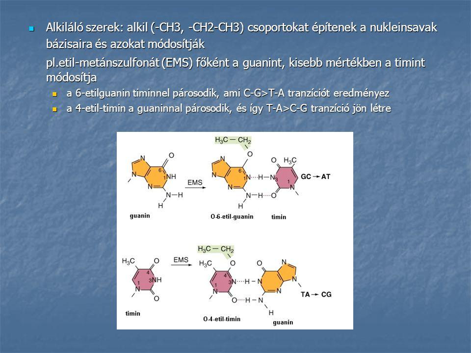 Alkiláló szerek: alkil (-CH3, -CH2-CH3) csoportokat építenek a nukleinsavak