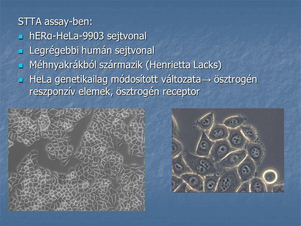 STTA assay-ben: hERα-HeLa-9903 sejtvonal. Legrégebbi humán sejtvonal. Méhnyakrákból származik (Henrietta Lacks)