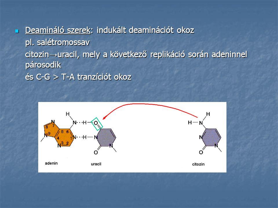 Deamináló szerek: indukált deaminációt okoz