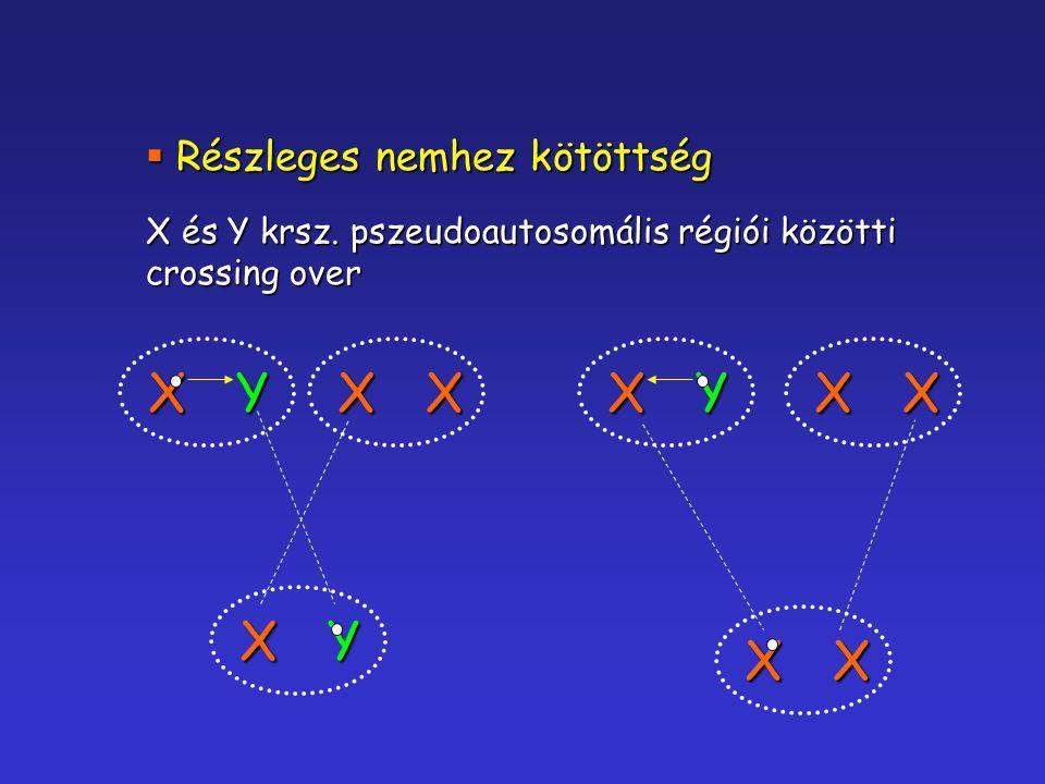 X Y X Y Részleges nemhez kötöttség