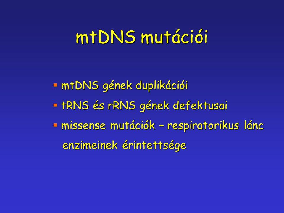 mtDNS mutációi mtDNS gének duplikációi tRNS és rRNS gének defektusai