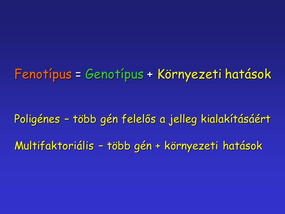 Fenotípus = Genotípus + Környezeti hatások