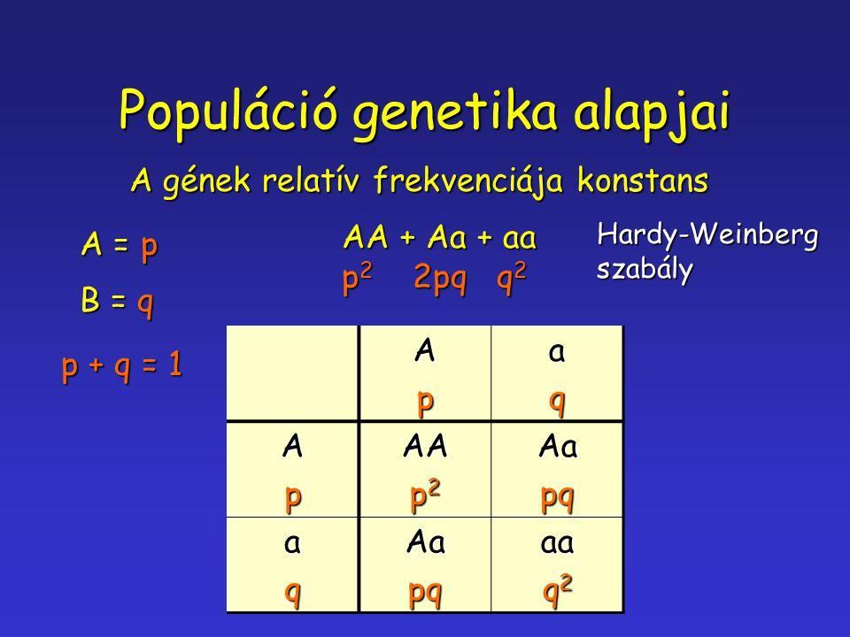 Populáció genetika alapjai