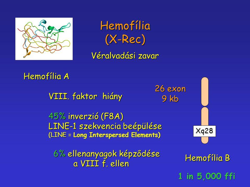 Hemofília (X-Rec) Véralvadási zavar Hemofília A VIII. faktor hiány