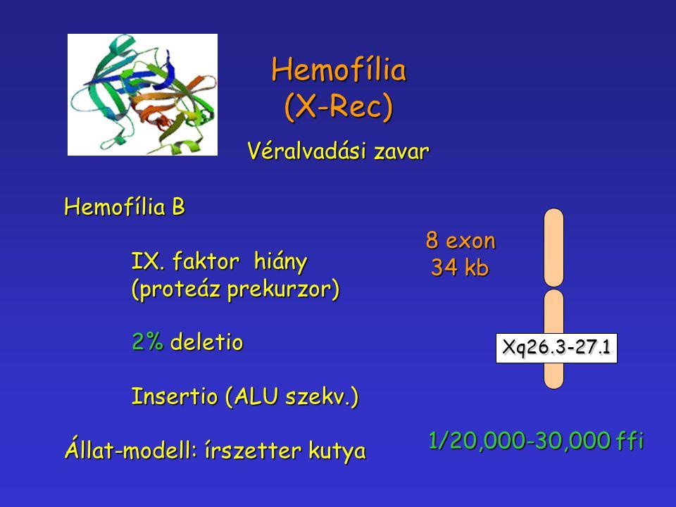 Hemofília (X-Rec) Véralvadási zavar Hemofília B IX. faktor hiány