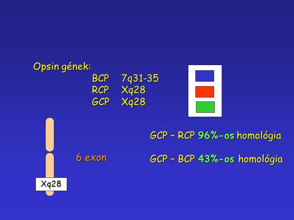 GCP – RCP 96%-os homológia GCP – BCP 43%-os homológia 6 exon