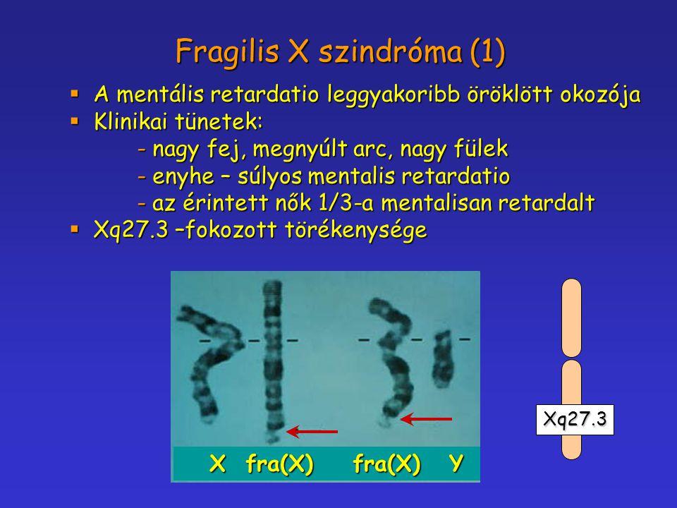 Fragilis X szindróma (1)