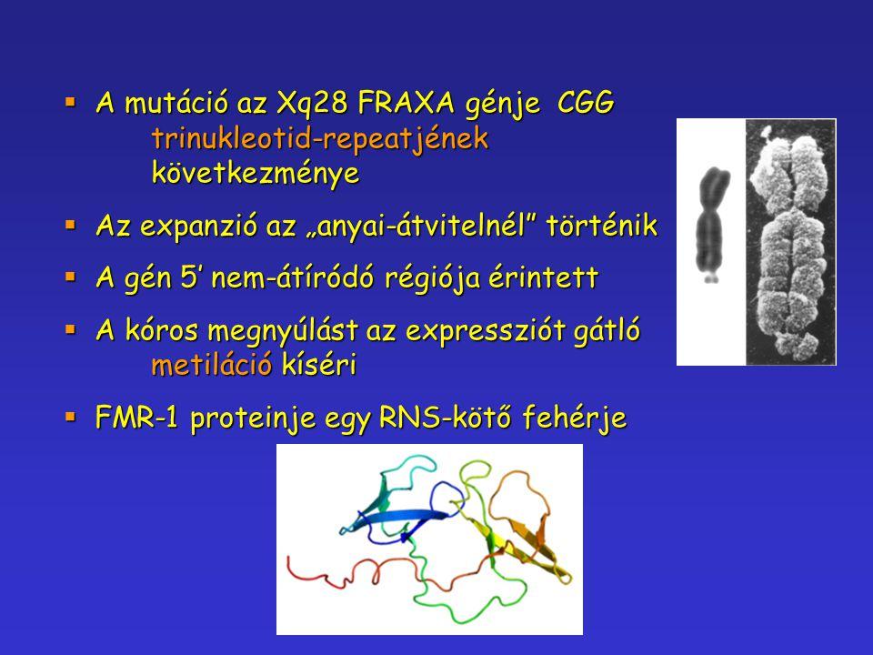 A mutáció az Xq28 FRAXA génje CGG. trinukleotid-repeatjének