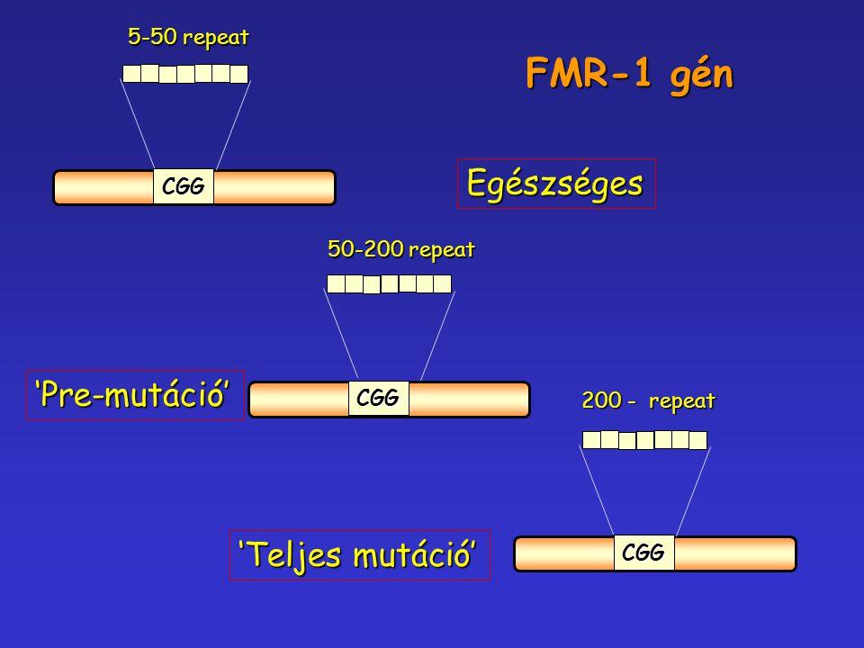 FMR-1 gén Egészséges 'Pre-mutáció' 'Teljes mutáció' 5-50 repeat CGG