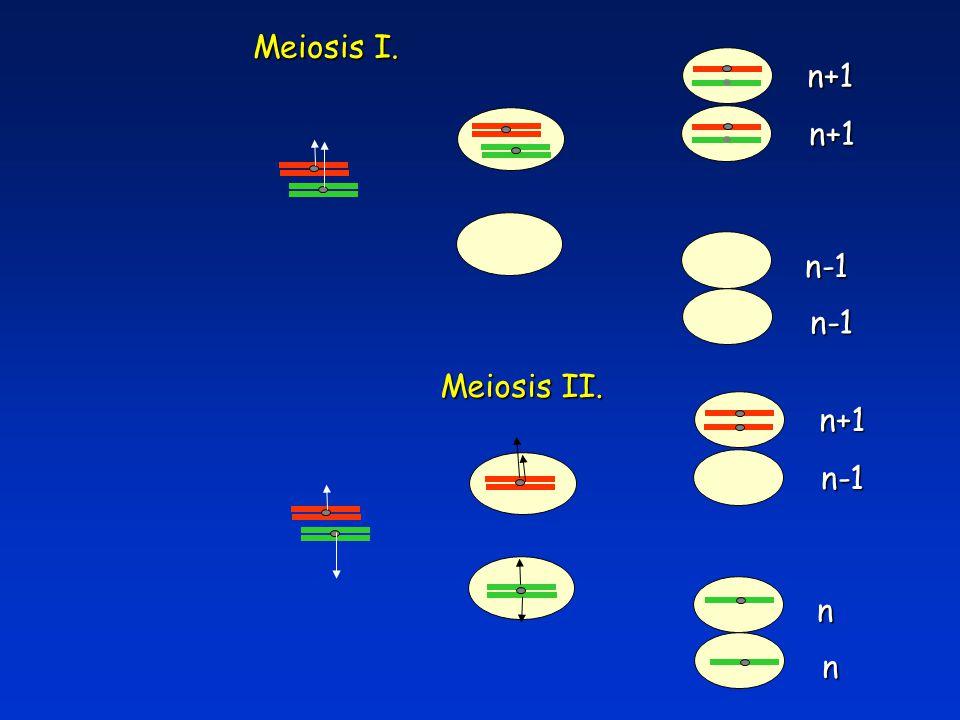 Meiosis I. n+1 n-1 n-1 Meiosis II. n+1 n-1 n