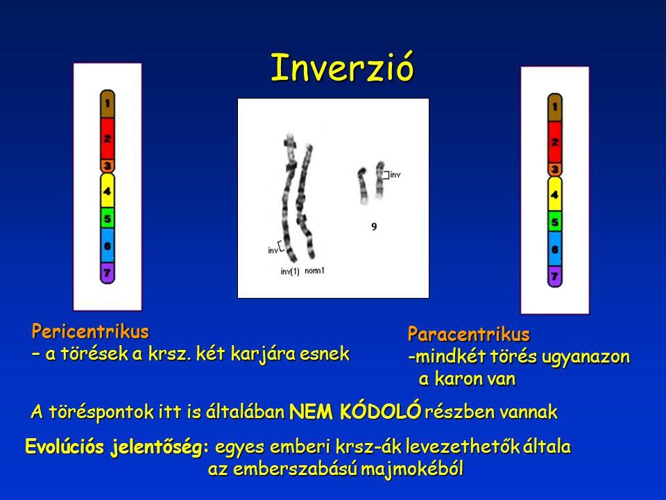 Inverzió Pericentrikus Paracentrikus