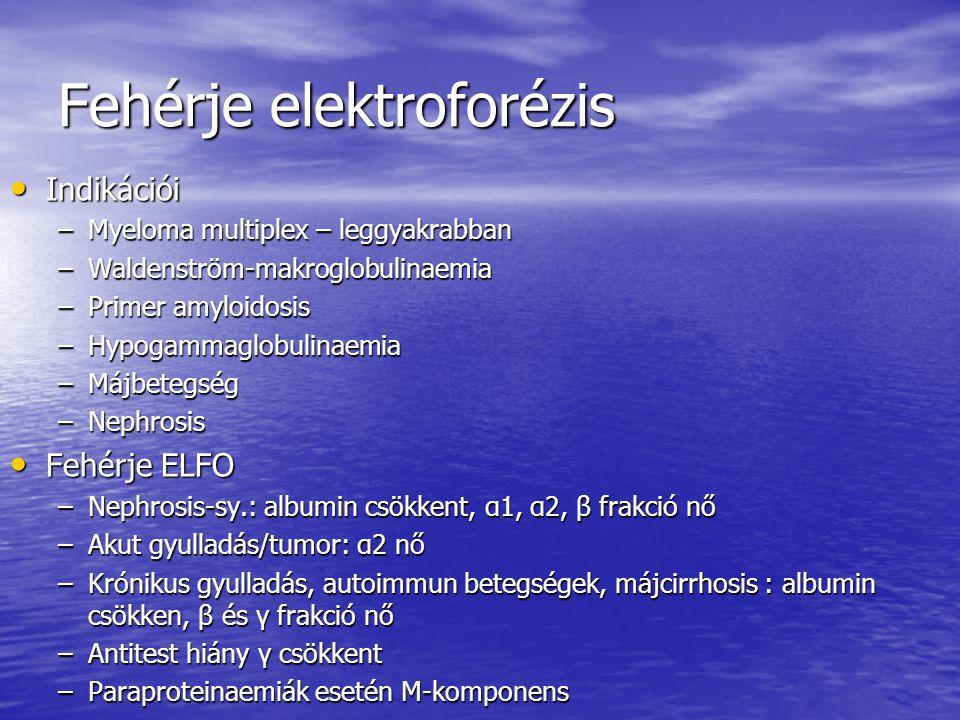 Fehérje elektroforézis