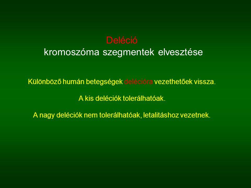 kromoszóma szegmentek elvesztése