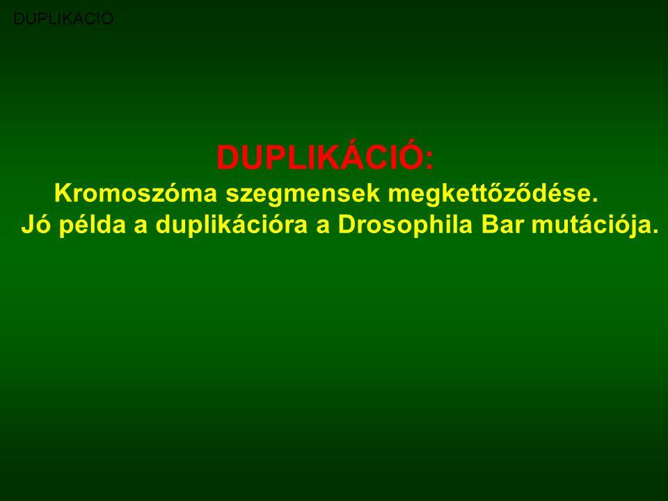 DUPLIKÁCIÓ: Kromoszóma szegmensek megkettőződése.