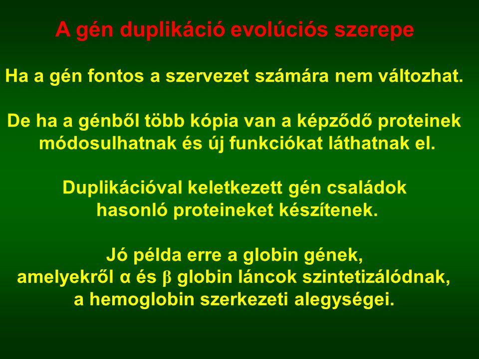 A gén duplikáció evolúciós szerepe
