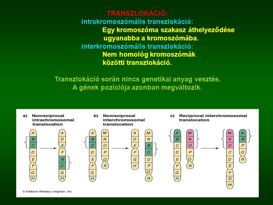 intrakromoszómális transzlokáció: Egy kromoszóma szakasz áthelyeződése