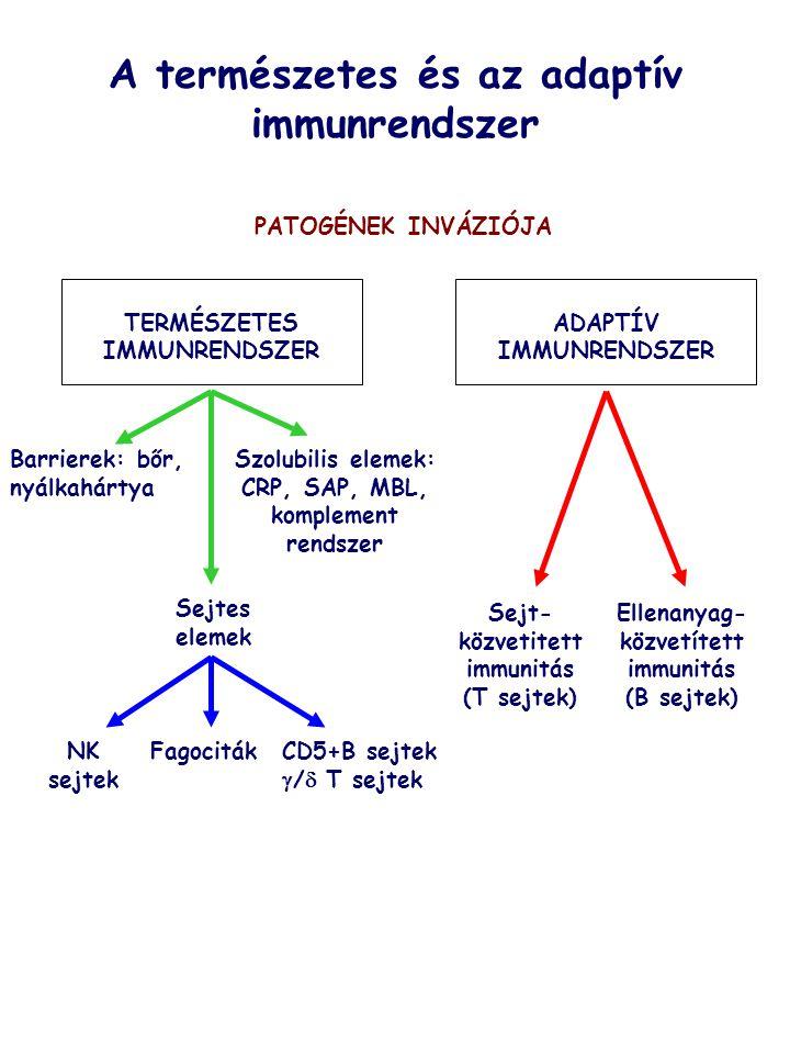 A természetes és az adaptív immunrendszer