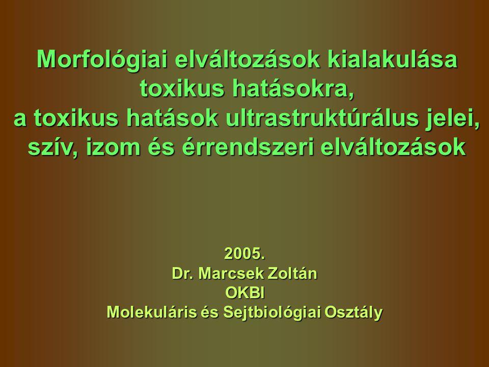 Morfológiai elváltozások kialakulása toxikus hatásokra,