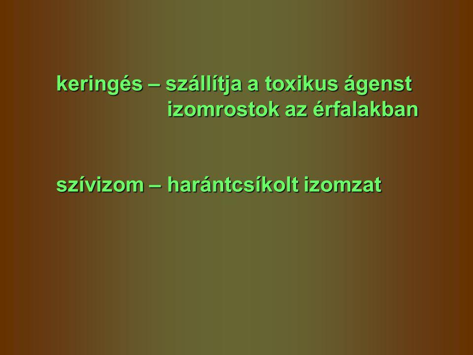 keringés – szállítja a toxikus ágenst