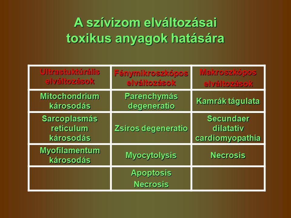 A szívizom elváltozásai toxikus anyagok hatására