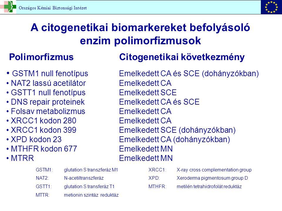 A citogenetikai biomarkereket befolyásoló enzim polimorfizmusok