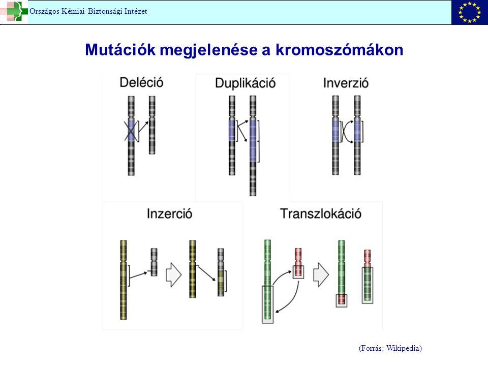 Mutációk megjelenése a kromoszómákon