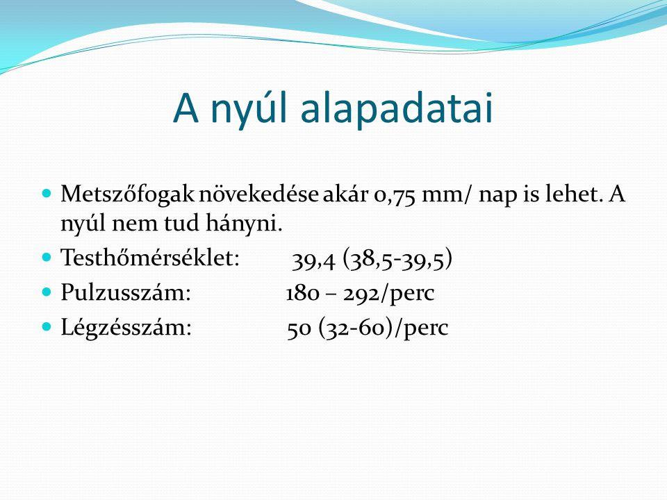 A nyúl alapadatai Metszőfogak növekedése akár 0,75 mm/ nap is lehet. A nyúl nem tud hányni. Testhőmérséklet: 39,4 (38,5-39,5)
