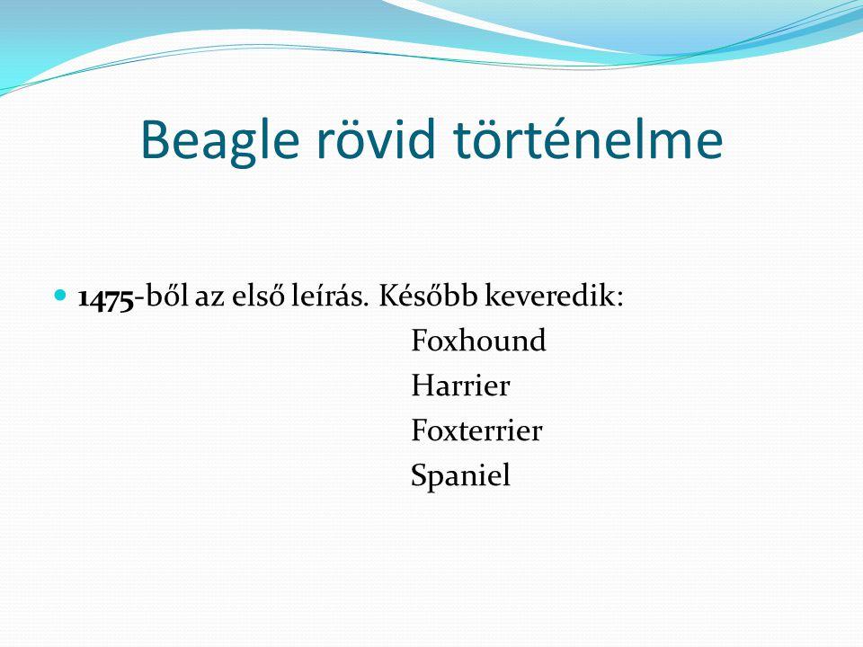 Beagle rövid történelme