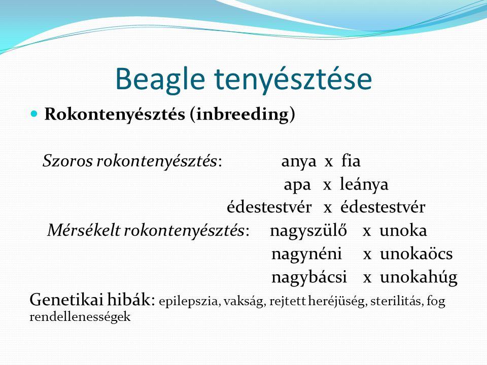 Beagle tenyésztése Rokontenyésztés (inbreeding)
