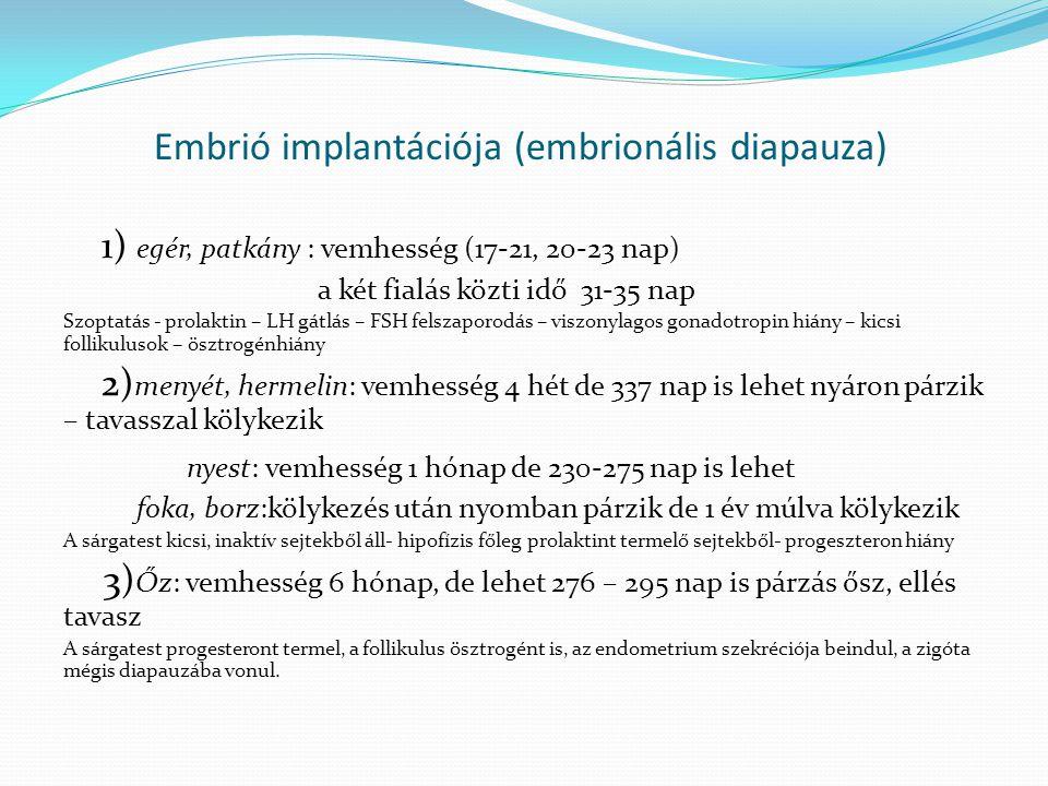 Embrió implantációja (embrionális diapauza)