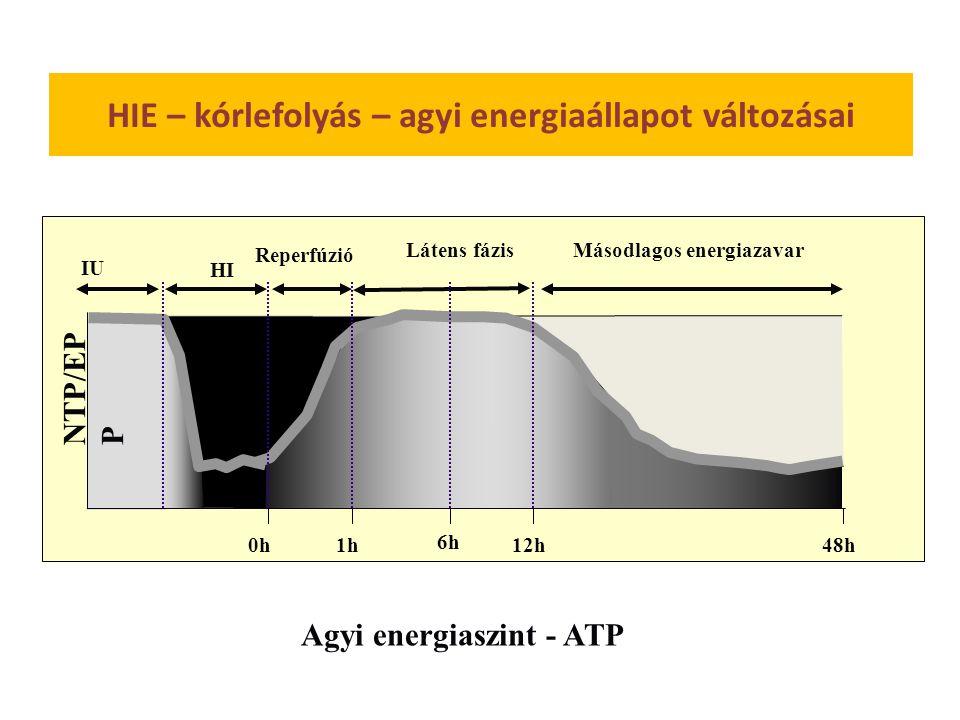 HIE – kórlefolyás – agyi energiaállapot változásai