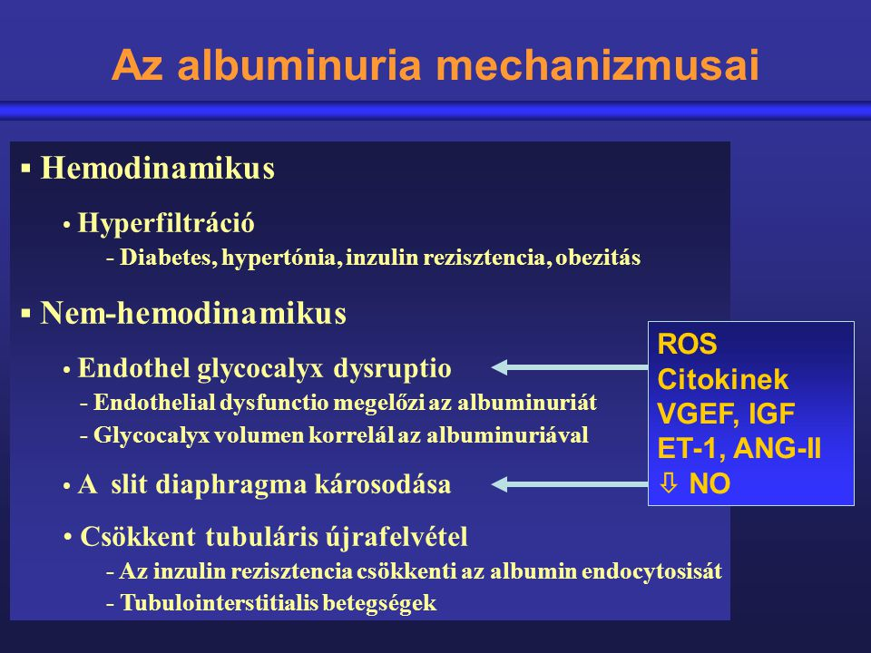 Az albuminuria mechanizmusai