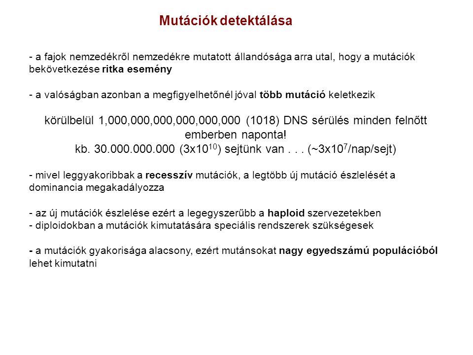 kb. 30.000.000.000 (3x1010) sejtünk van . . . (~3x107/nap/sejt)