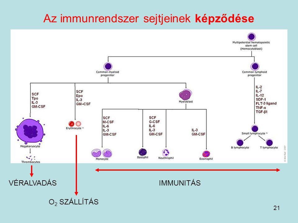 Az immunrendszer sejtjeinek képződése