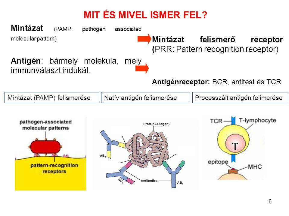 MIT ÉS MIVEL ISMER FEL Mintázat (PAMP: pathogen associated molecular pattern) Antigén: bármely molekula, mely immunválaszt indukál.