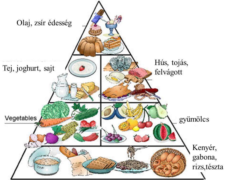 Olaj, zsír édesség Hús, tojás, felvágott Tej, joghurt, sajt gyümölcs Kenyér, gabona, rizs,tészta