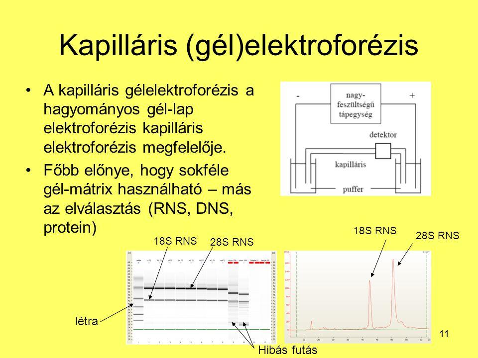 Kapilláris (gél)elektroforézis