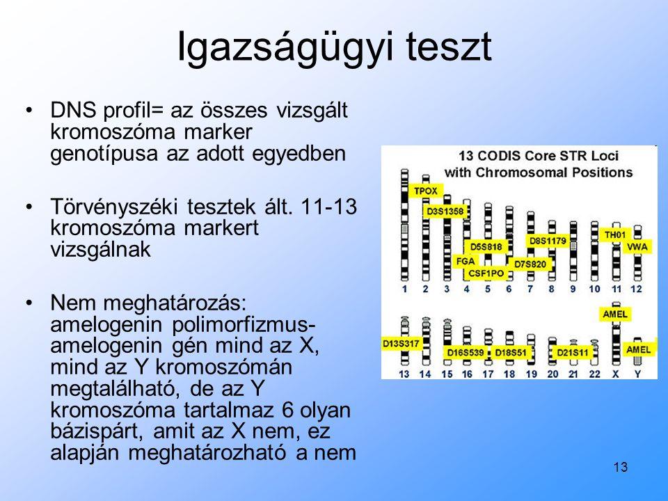 Igazságügyi teszt DNS profil= az összes vizsgált kromoszóma marker genotípusa az adott egyedben.