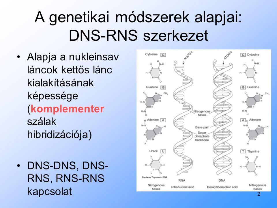 A genetikai módszerek alapjai: DNS-RNS szerkezet