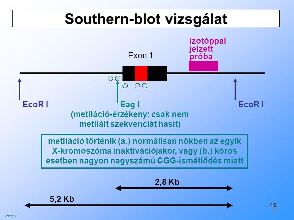 Southern-blot vizsgálat