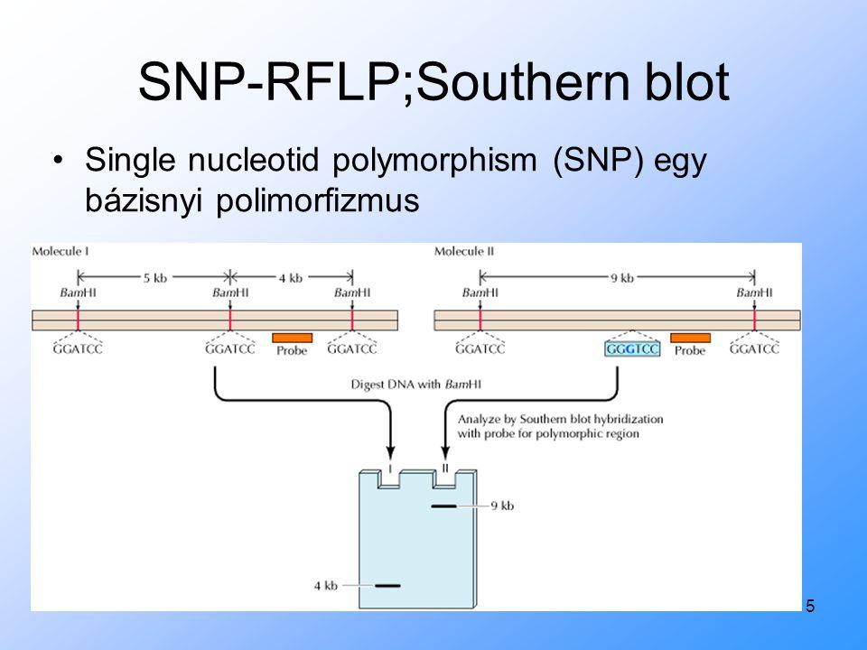 SNP-RFLP;Southern blot